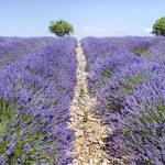 """Provence France"" by lillisphotography"