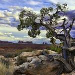 """Twisted Tree in Arches National Park"" by garymcurtisphoto"