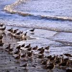 """""""Seagull Beach"""" by raetucker"""