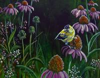 Goldfinch and Coneflowers