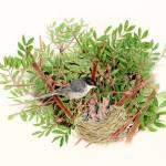 """Sardinian Warbler - nesting bird"" by patriziadonaera"