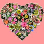 """""""Flowers of my Heart"""" by carolmunrophotoart"""