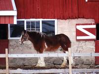 Red barn, big horse