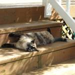 """""""Sun and Shade bathing"""" by rondascreationds"""