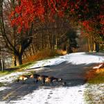 """""""Goose Crossing"""" by raetucker"""