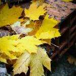 """""""Yellow leaf with drops"""" by MatteoCozzi"""