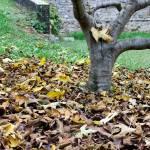 """""""Dead leaves"""" by MatteoCozzi"""