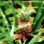 """Pineapple"" by NunoGomes"