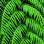"""Plant"" by NunoGomes"