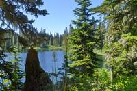 Bear Grass Lake110804_047c1