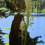 """Beargrass and Stump #110804_049c1.1"" by anselprice"