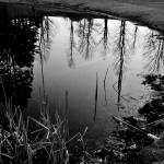 """Upton Cemetery Pond"" by bavosiphotoart"