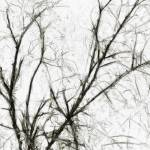 """""""The Naked Presence of Trees in Winter"""" by studiodestruct"""