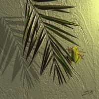 Tree Frog on Wall