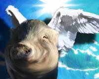 Angel Pig or Flying Pig