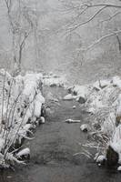 Brewster Herring Run In The Winter