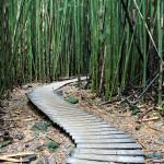 """Bamboo forest Pathway"" by pierreleclerc"