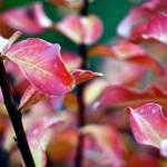 """Autumn Twigs"" by raetucker"