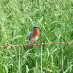 """Pretty Birdie"" by MsMelani"