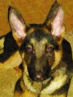 Custom German Shepherd Canvas