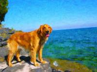 Custom Golden Retriever Painting