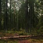 """""""Fallen Oak"""" by JRTurner"""