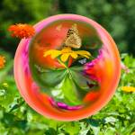 """Butterfly Globe"" by tricia"