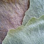 """Leaf Texture"" by ZeipekisPhotography"