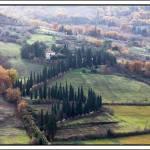 """Colonnade of Trees"" by manuelmazzei"