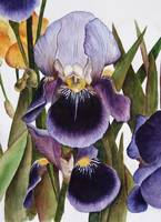My Iris Garden - watercolor