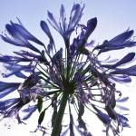 """Purple explosion"" by JRTurner"