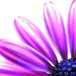 """""""petals"""" by i2i"""
