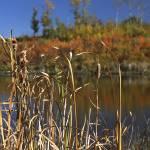 """""""Reeds"""" by RickAcadie"""