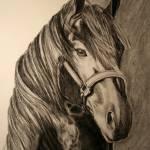 """""""Stallion"""" by Madhuri"""