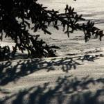 """Snow Shadows_7802 denise davies 14"" by davies"