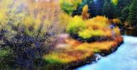 autumn stream soft glow
