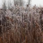"""Grassy field in the frost."" by WaynePhotoGuy"