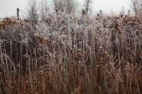 Grassy field in the frost.