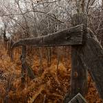 """The incredible fence and the frost"" by WaynePhotoGuy"