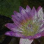 """mosaic - ""Water Lily"" (vertical)"" by kinnally"