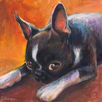 Coy Boston Terrier painting