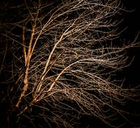 Square Branches at Night