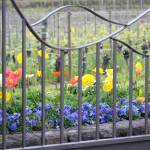 """""""flowers behind the gate"""" by Denalua"""