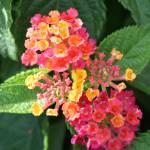 """""""funny flower in the garden"""" by Denalua"""