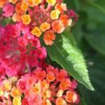 """flowers for fun"" by Denalua"