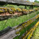 """""""Mossy Fence"""" by pkripper503"""