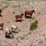 """Mustang Herd"" by JMcQ"