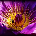 """Lotus and Fly Macro"" by ChrisCrowley"