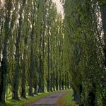 """French Road Tree Lined"" by kphotos"