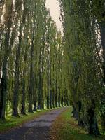French Road Tree Lined